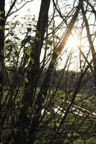 Słońce jesieni