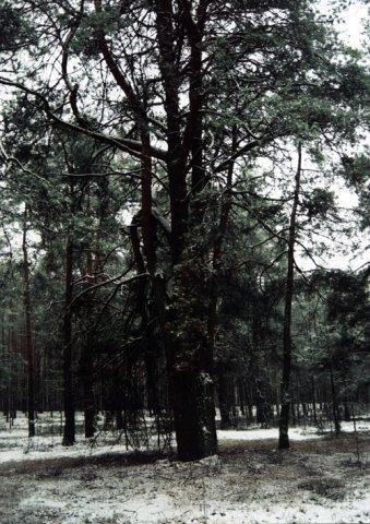 Zimą po lesie